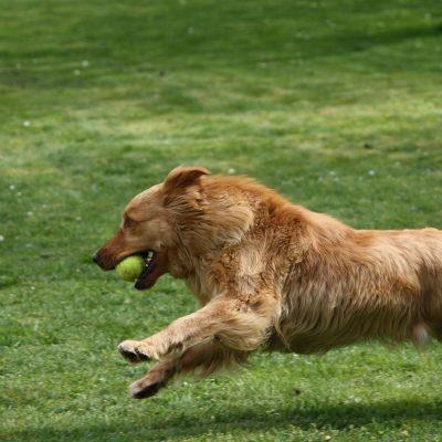dog-2069239_1920