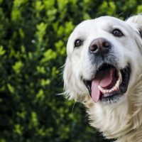dog-2753369_1920