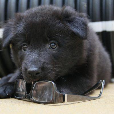 puppy-476800_1920